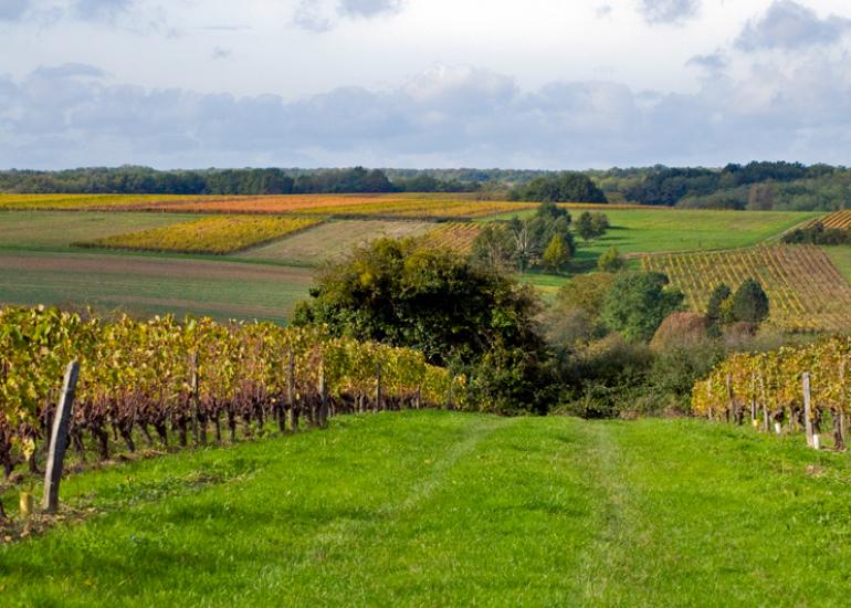 vue-vignoble-vallee-du-cher©ADT41-JPh-Tesson-(1)