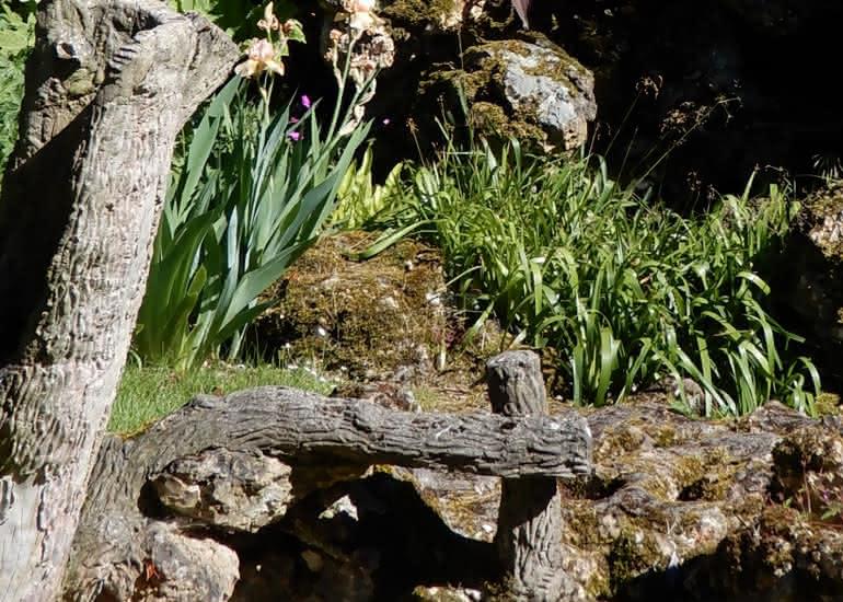 Visite jardins - Vendôme