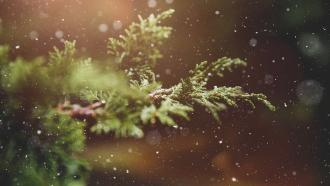 Sortie : reconnaissance des arbres en hiver